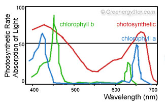 Photosynthetic Rate